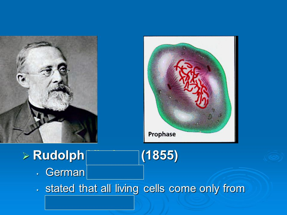  Rudolph Virchow (1855) German physician German physician stated that all living cells come only from other living cells stated that all living cells come only from other living cells
