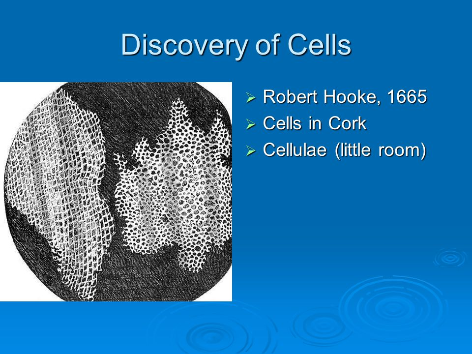 Life 1402: Principles of Biology Chapter 4: A Tour of the Cell