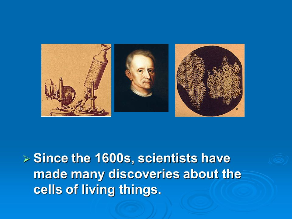  Since the 1600s, scientists have made many discoveries about the cells of living things.