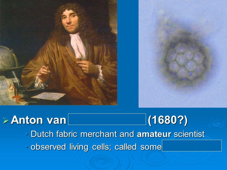  Anton van Leeuwenhoek (1680 ) Dutch fabric merchant and amateur scientistDutch fabric merchant and amateur scientist observed living cells; called some animalcules observed living cells; called some animalcules