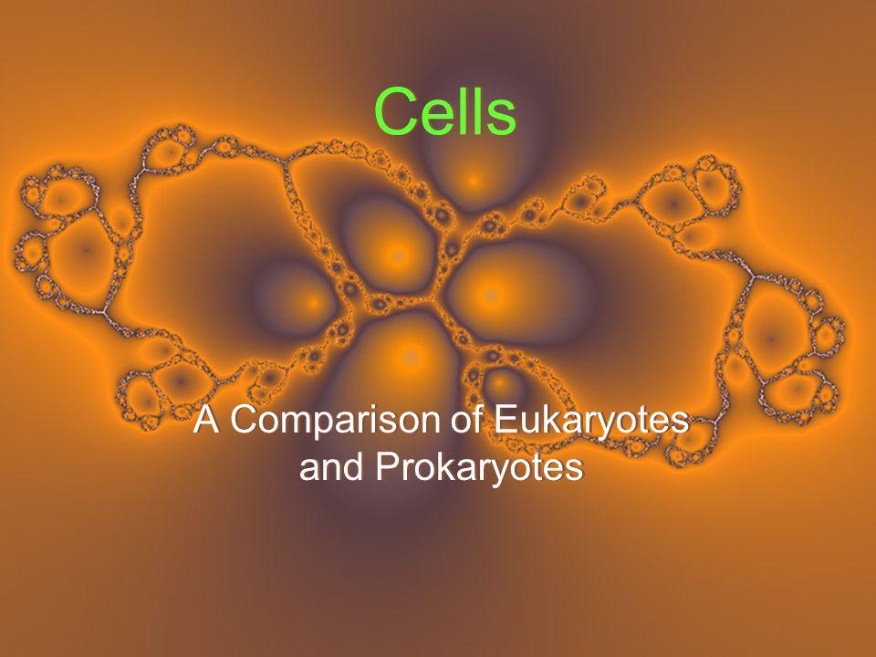 Cells A Comparison of Eukaryotes and Prokaryotes