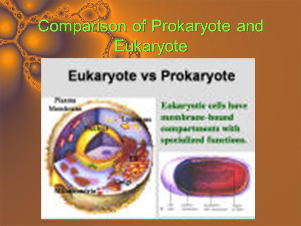 Comparison of Prokaryote and Eukaryote