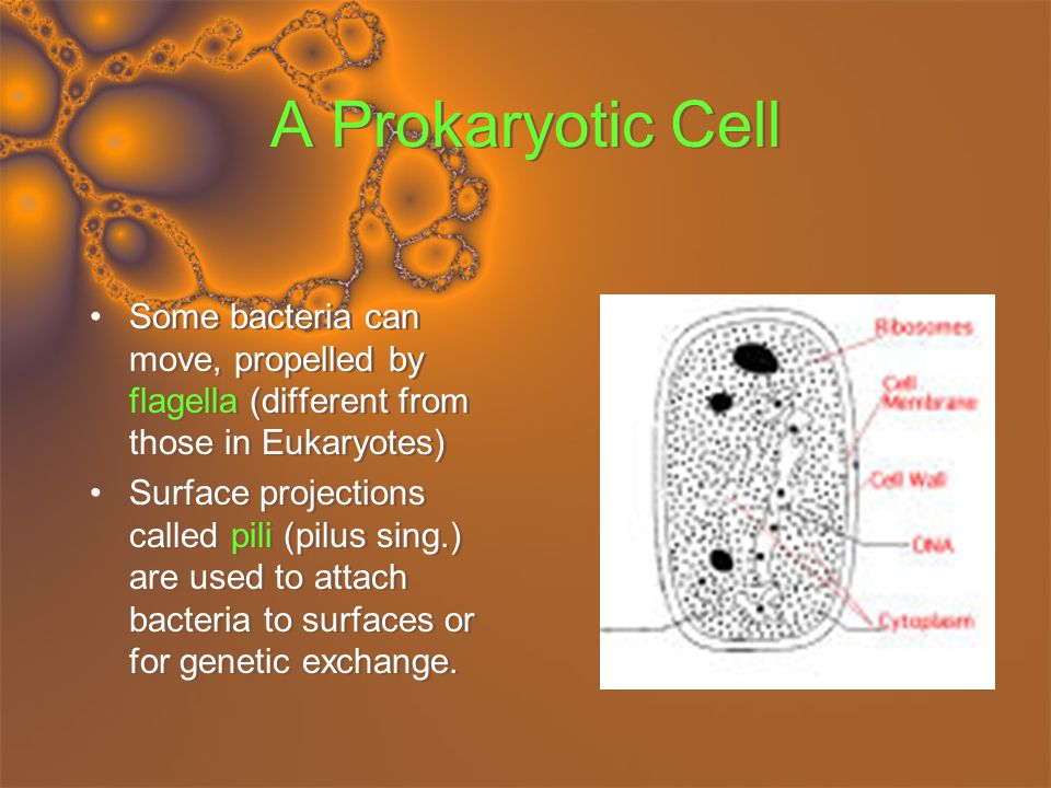 A Prokaryotic Cell Some bacteria can move, propelled by flagella (different from those in Eukaryotes) Surface projections called pili (pilus sing.) are used to attach bacteria to surfaces or for genetic exchange.