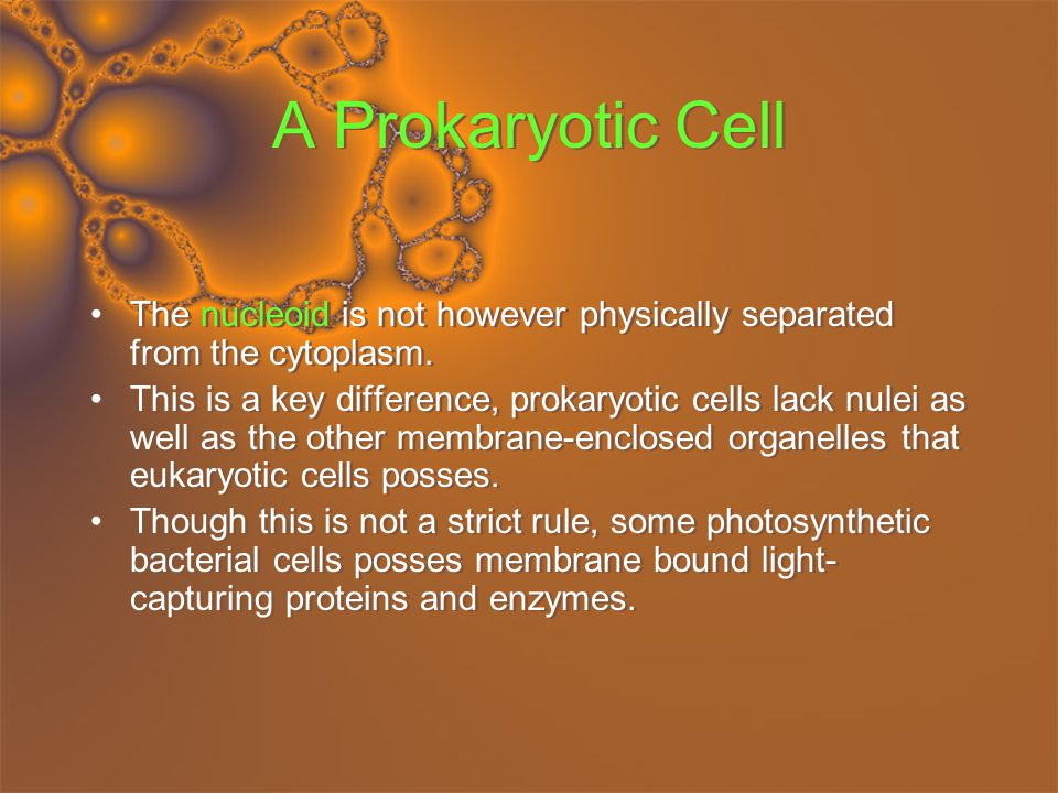 A Prokaryotic Cell The nucleoid is not however physically separated from the cytoplasm.
