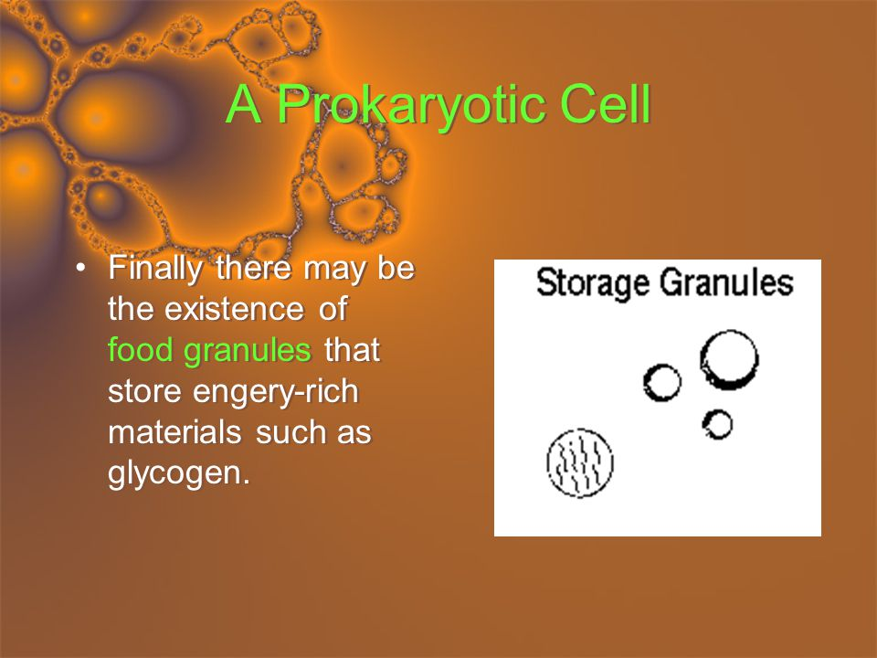 A Prokaryotic Cell Finally there may be the existence of food granules that store engery-rich materials such as glycogen.