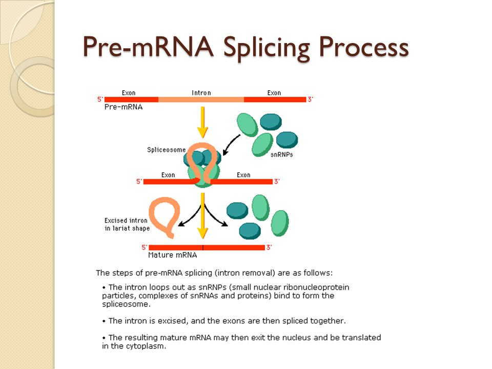 Pre-mRNA Splicing Process