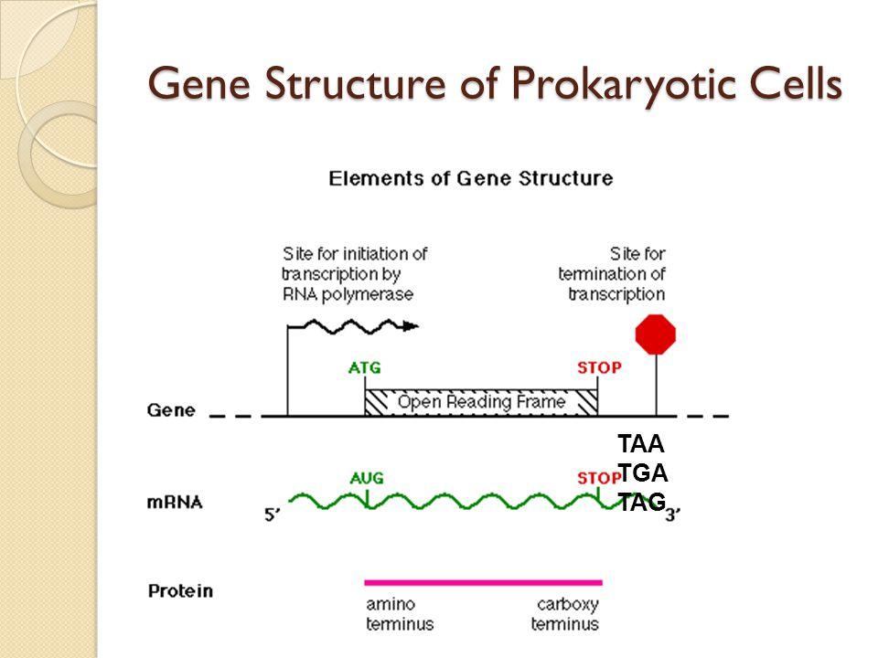 Genes in Eukaryotic Cells