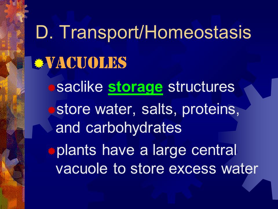 "D. Transport/Homeostasis  Lysosomes  contain chemicals & enzymes necessary for digesting certain materials in the cell  the ""clean-up crew""  not i"