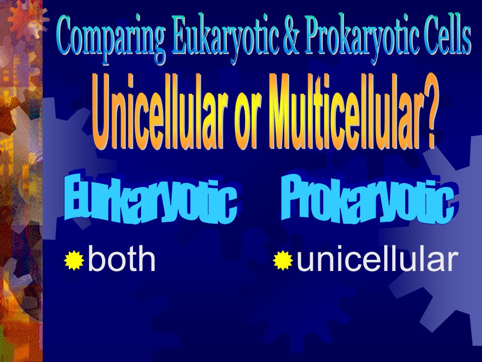 both  unicellular