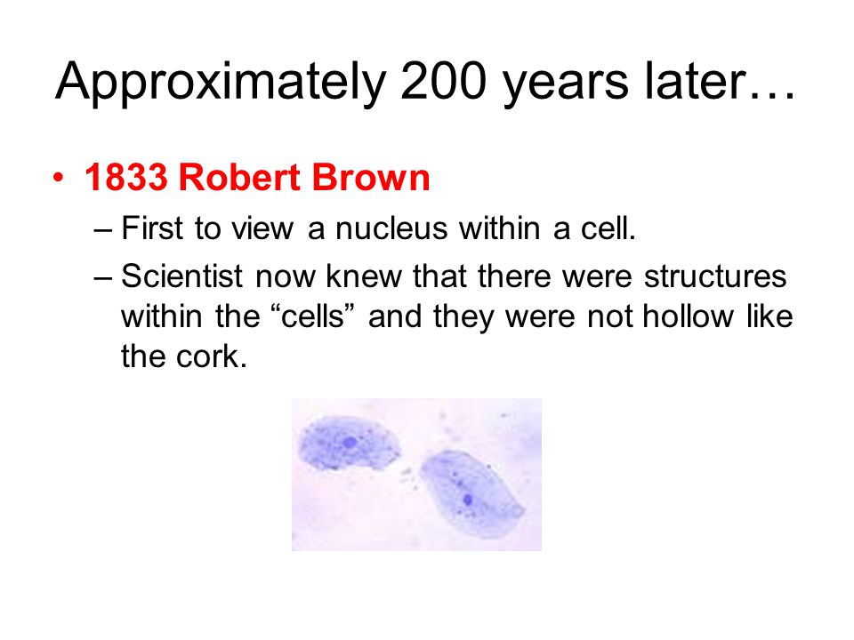 Approximately 200 years later… 1833 Robert Brown –First to view a nucleus within a cell.