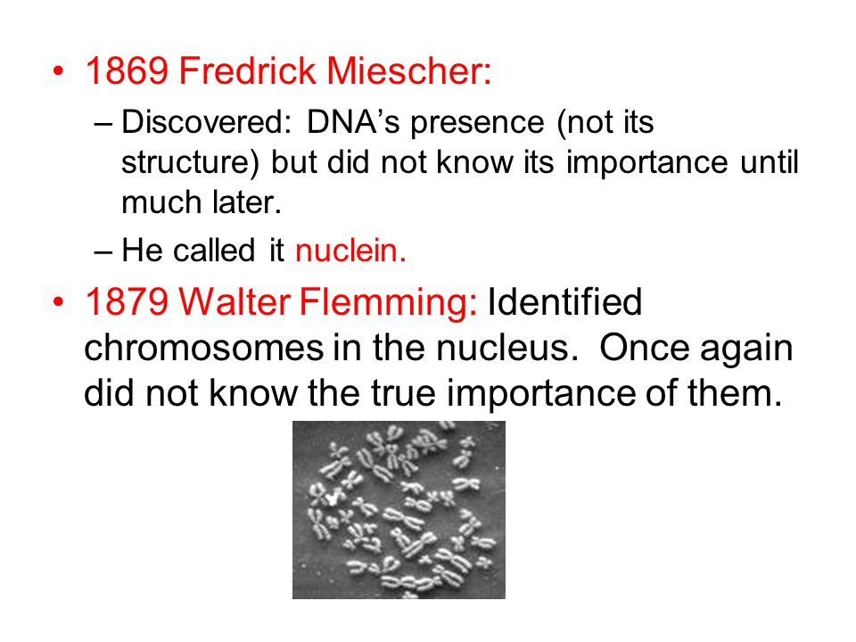 1869 Fredrick Miescher: –Discovered: DNA's presence (not its structure) but did not know its importance until much later.