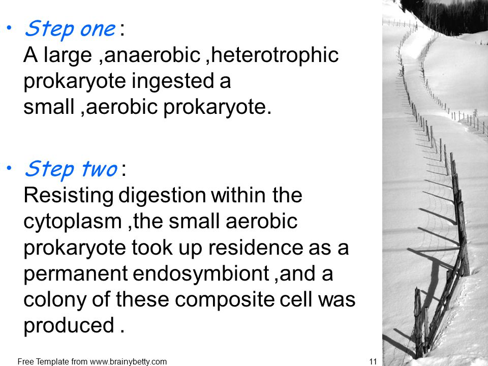 Free Template from www.brainybetty.com11 Step one : A large,anaerobic,heterotrophic prokaryote ingested a small,aerobic prokaryote.