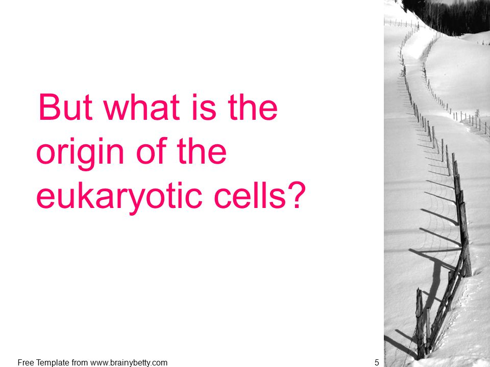 Free Template from www.brainybetty.com5 But what is the origin of the eukaryotic cells