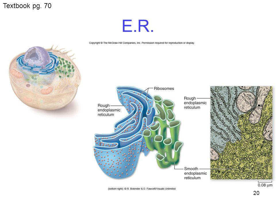 20 E.R. Textbook pg. 70