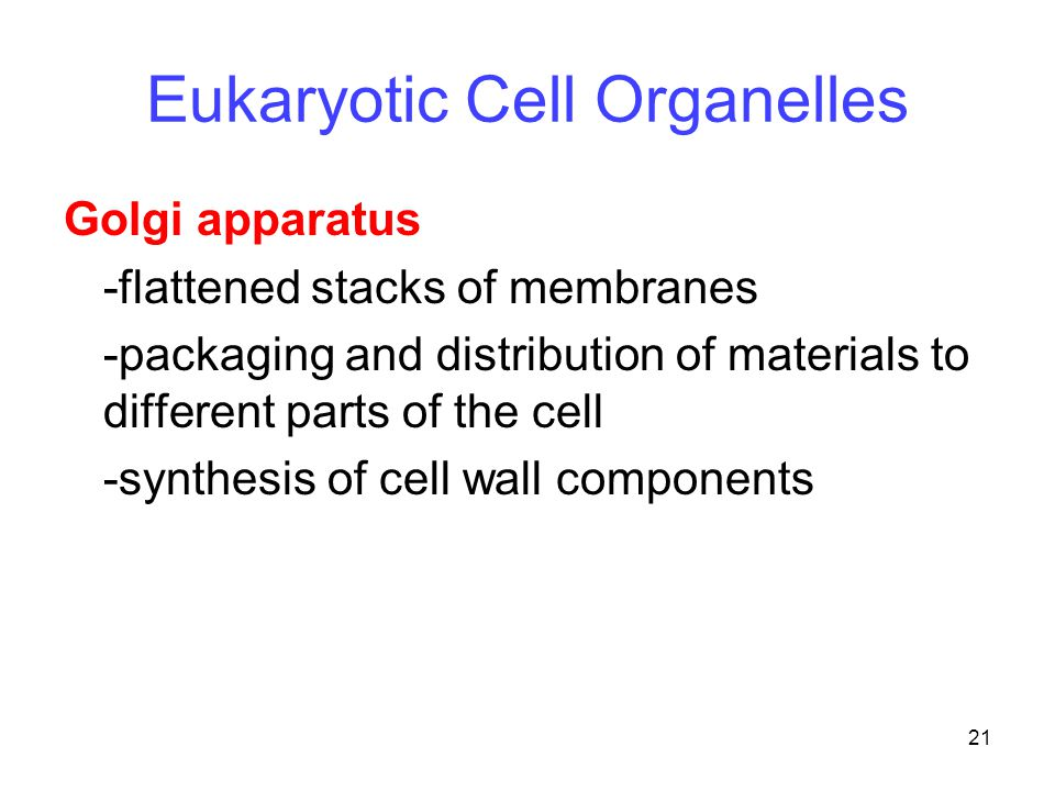21 Golgi apparatus -flattened stacks of membranes -packaging and distribution of materials to different parts of the cell -synthesis of cell wall comp