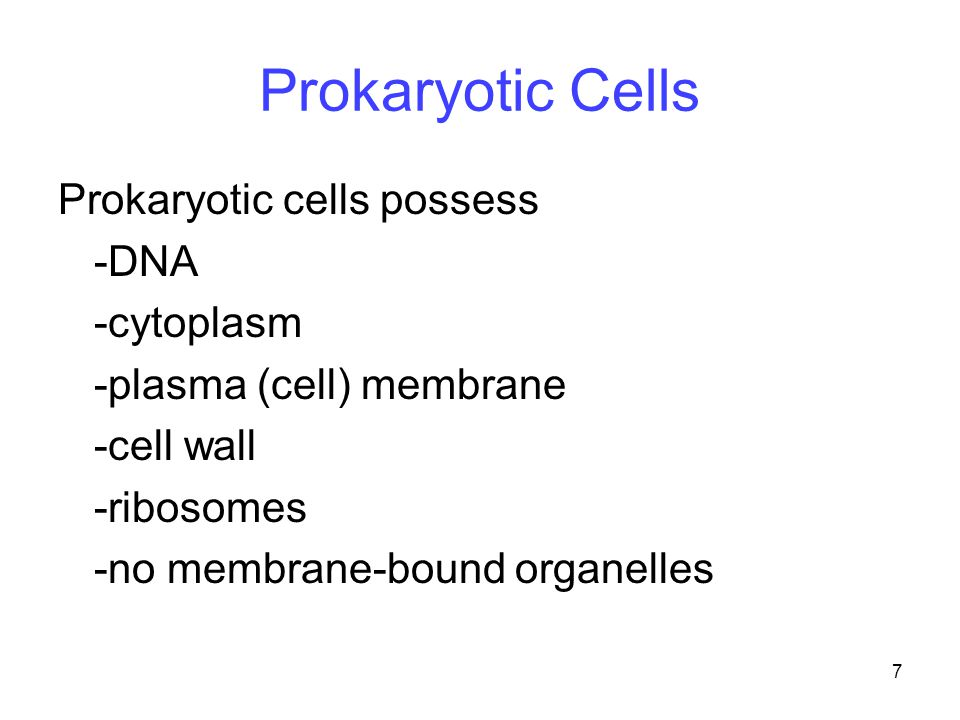 7 Prokaryotic Cells Prokaryotic cells possess -DNA -cytoplasm -plasma (cell) membrane -cell wall -ribosomes -no membrane-bound organelles