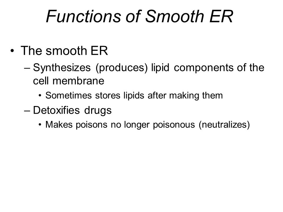 Functions of Smooth ER The smooth ER –Synthesizes (produces) lipid components of the cell membrane Sometimes stores lipids after making them –Detoxifi