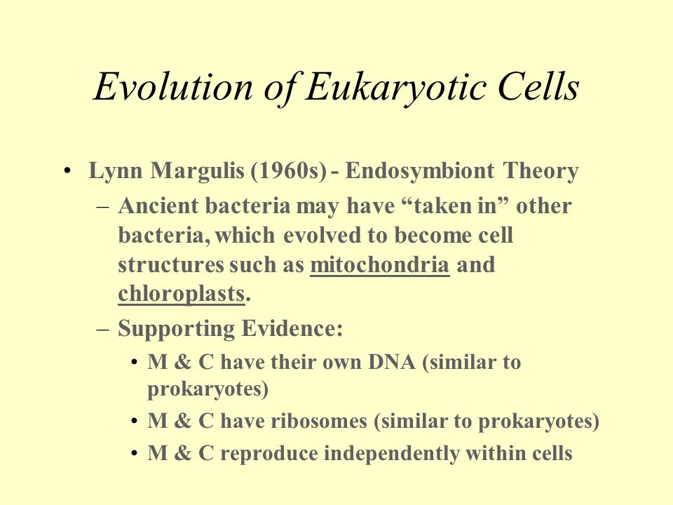 "Evolution of Eukaryotic Cells Lynn Margulis (1960s) - Endosymbiont Theory –Ancient bacteria may have ""taken in"" other bacteria, which evolved to becom"