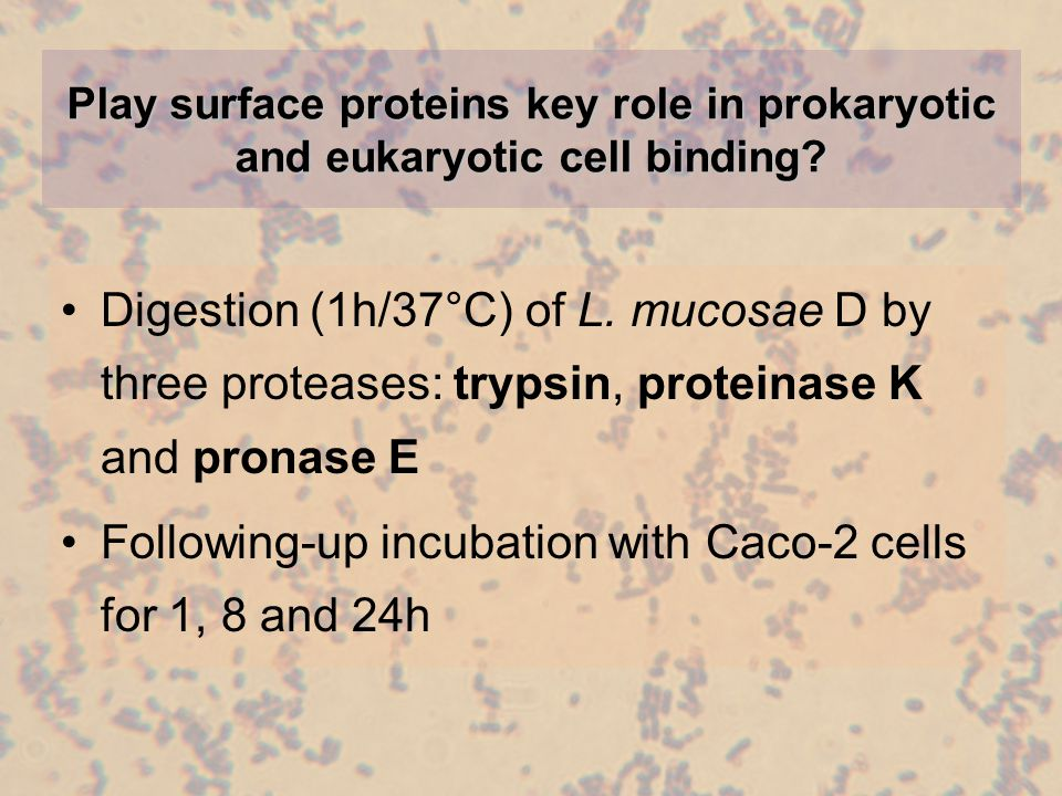 Play surface proteins key role in prokaryotic and eukaryotic cell binding.