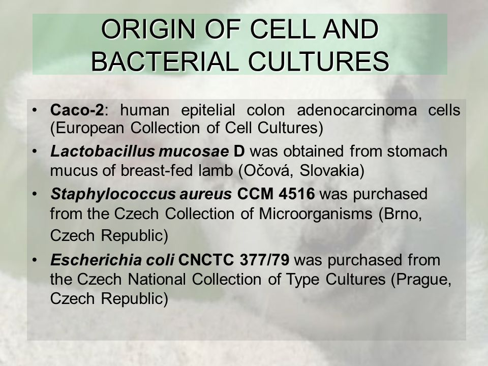 ORIGIN OF CELL AND BACTERIAL CULTURES Caco-2: human epitelial colon adenocarcinoma cells (European Collection of Cell Cultures) Lactobacillus mucosae D was obtained from stomach mucus of breast-fed lamb (Očová, Slovakia) Staphylococcus aureus CCM 4516 was purchased from the Czech Collection of Microorganisms (Brno, Czech Republic) Escherichia coli CNCTC 377/79 was purchased from the Czech National Collection of Type Cultures (Prague, Czech Republic)