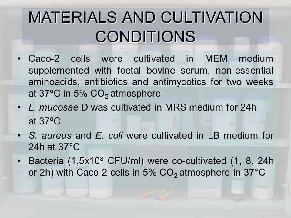 MATERIALS AND CULTIVATION CONDITIONS Caco-2 cells were cultivated in MEM medium supplemented with foetal bovine serum, non-essential aminoacids, antibiotics and antimycotics for two weeks at 37ºC in 5% CO 2 atmosphere L.