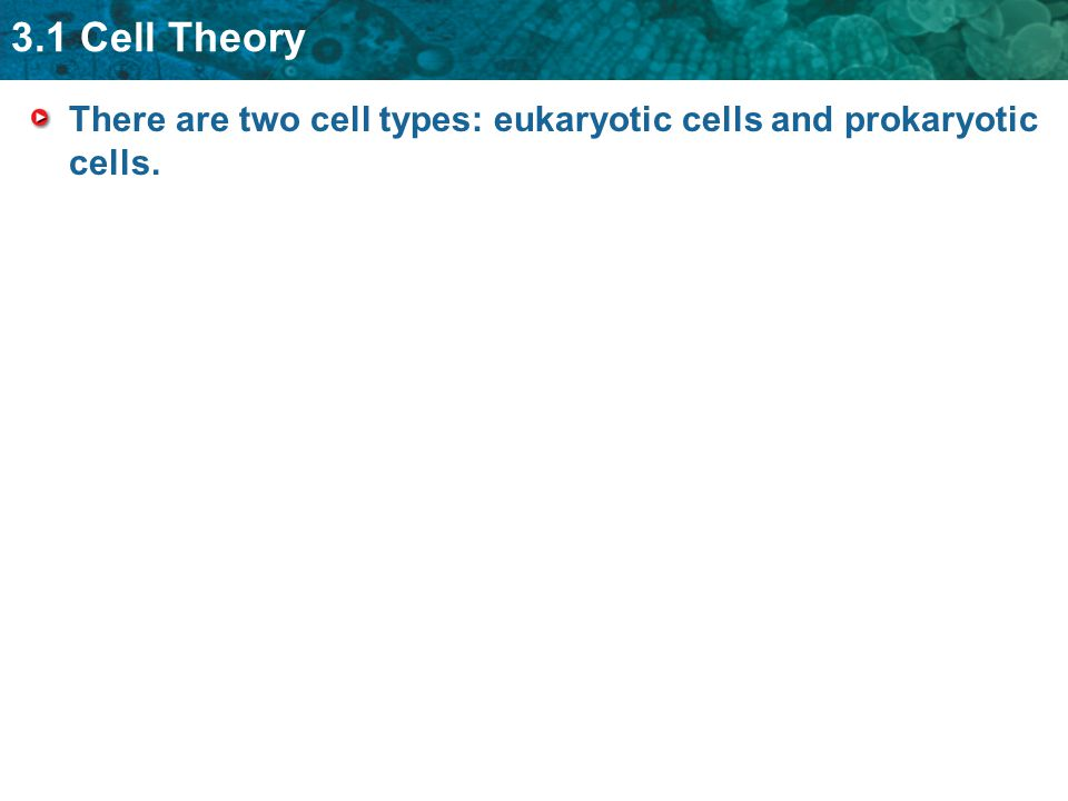 3.1 Cell Theory There are two cell types: eukaryotic cells and prokaryotic cells.