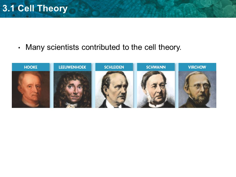 3.1 Cell Theory Many scientists contributed to the cell theory.