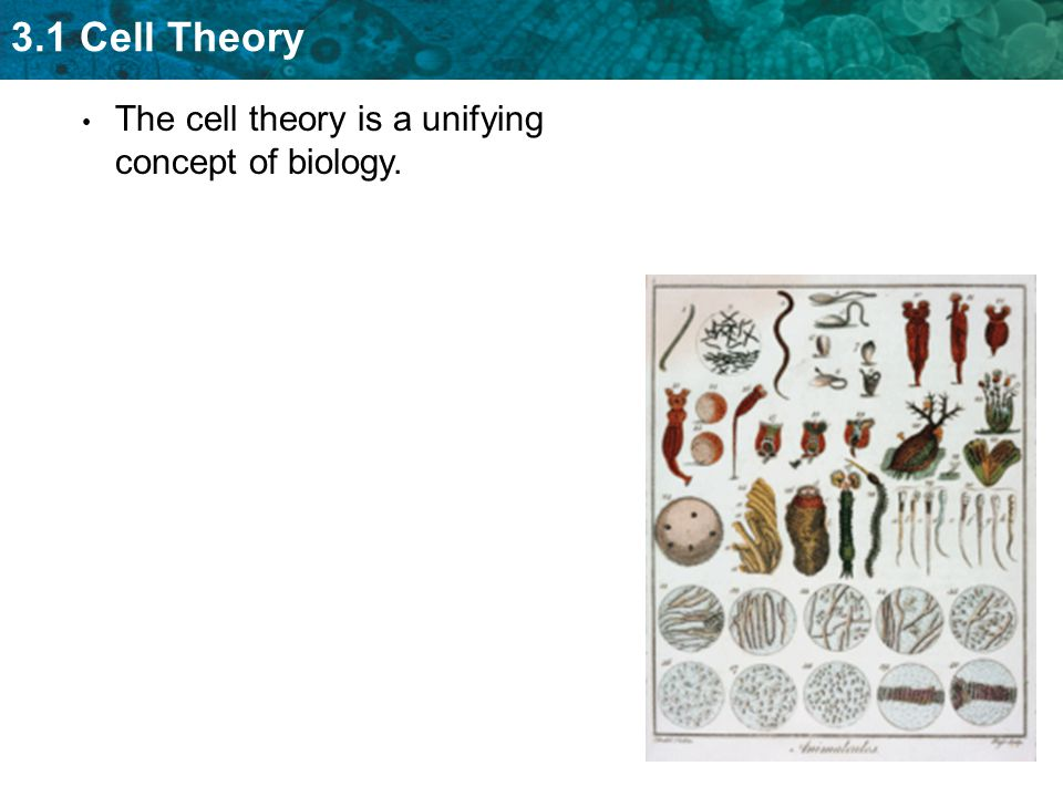 3.1 Cell Theory The cell theory is a unifying concept of biology.