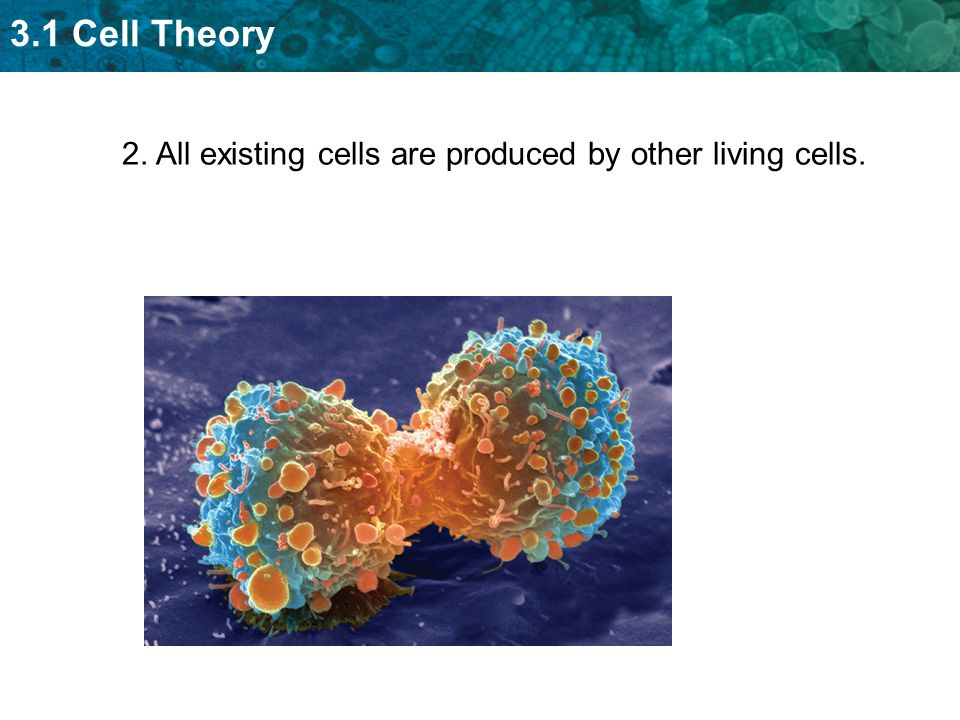 3.1 Cell Theory 2. All existing cells are produced by other living cells.