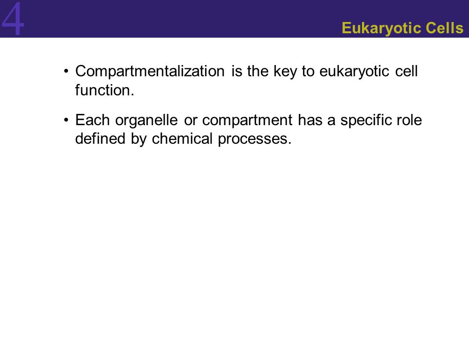 4 Eukaryotic Cells Compartmentalization is the key to eukaryotic cell function. Each organelle or compartment has a specific role defined by chemical