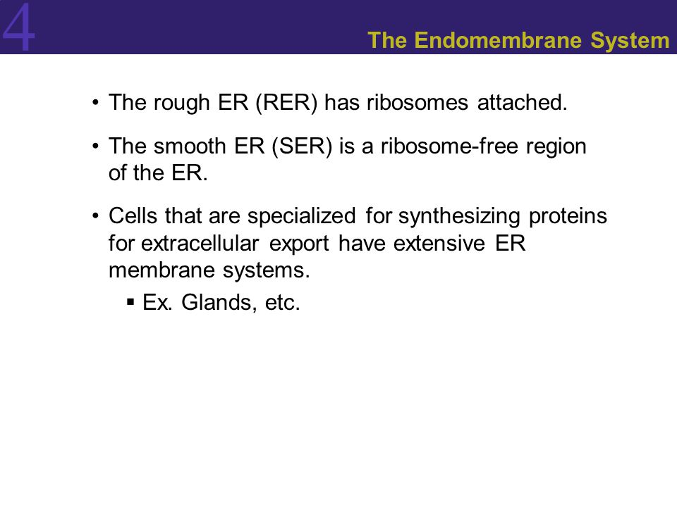 4 The Endomembrane System The rough ER (RER) has ribosomes attached. The smooth ER (SER) is a ribosome-free region of the ER. Cells that are specializ
