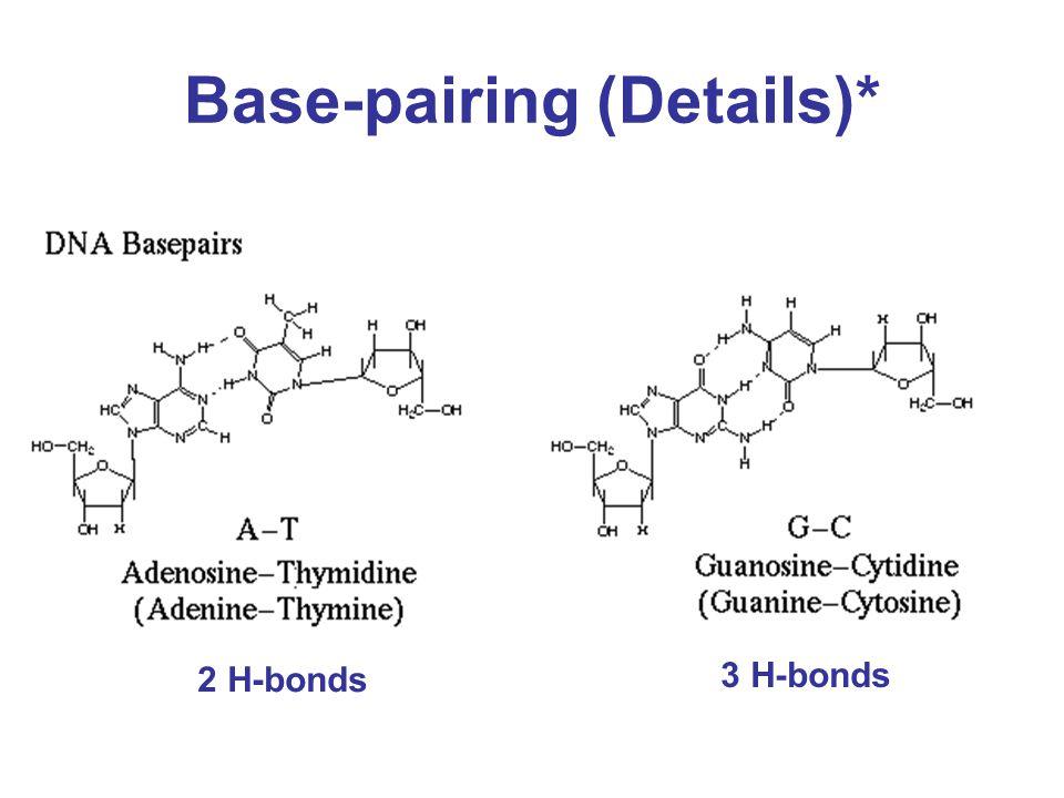 Base-pairing (Details)* 2 H-bonds 3 H-bonds