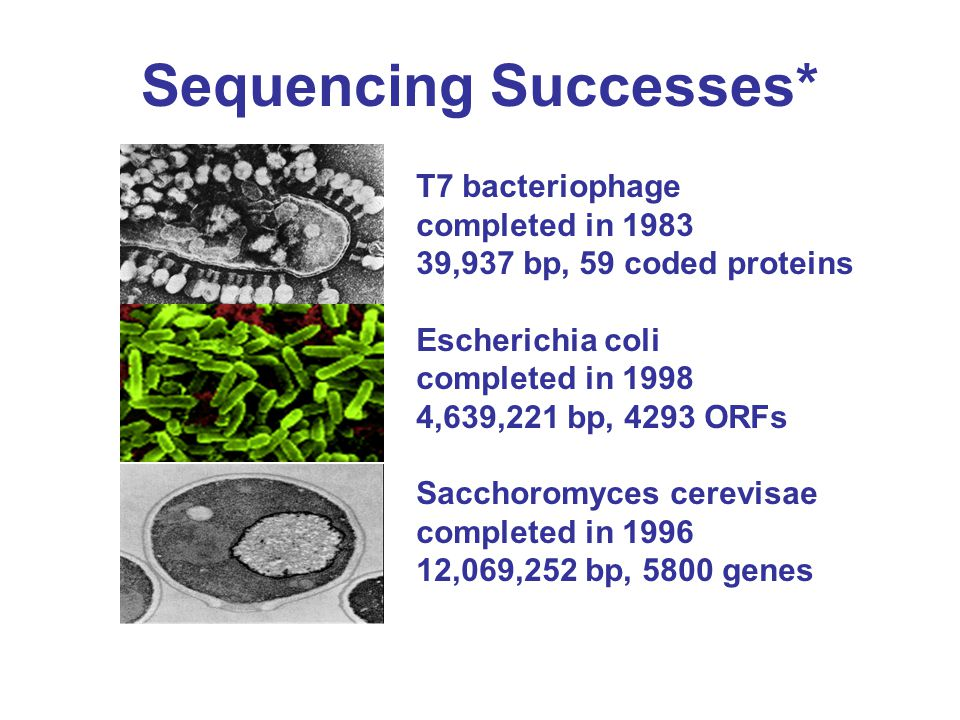 Sequencing Successes* T7 bacteriophage completed in 1983 39,937 bp, 59 coded proteins Escherichia coli completed in 1998 4,639,221 bp, 4293 ORFs Sacchoromyces cerevisae completed in 1996 12,069,252 bp, 5800 genes