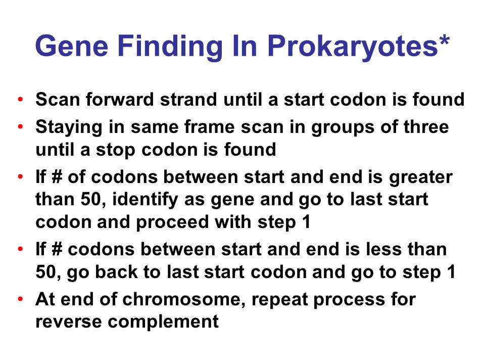 Gene Finding In Prokaryotes* Scan forward strand until a start codon is found Staying in same frame scan in groups of three until a stop codon is found If # of codons between start and end is greater than 50, identify as gene and go to last start codon and proceed with step 1 If # codons between start and end is less than 50, go back to last start codon and go to step 1 At end of chromosome, repeat process for reverse complement