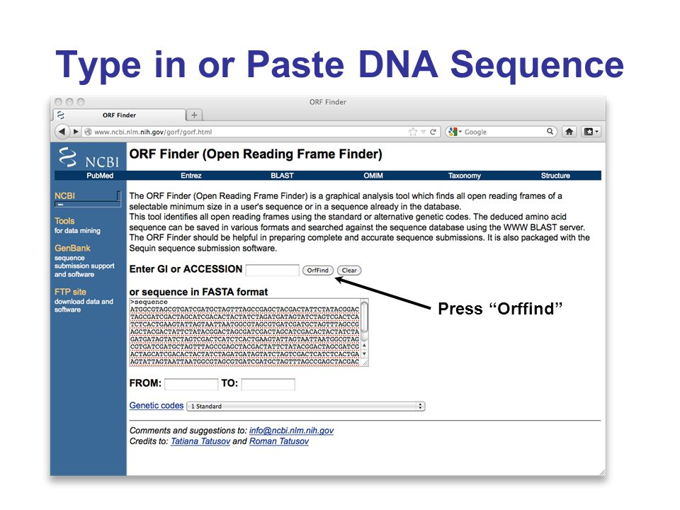 Type in or Paste DNA Sequence Press Orffind