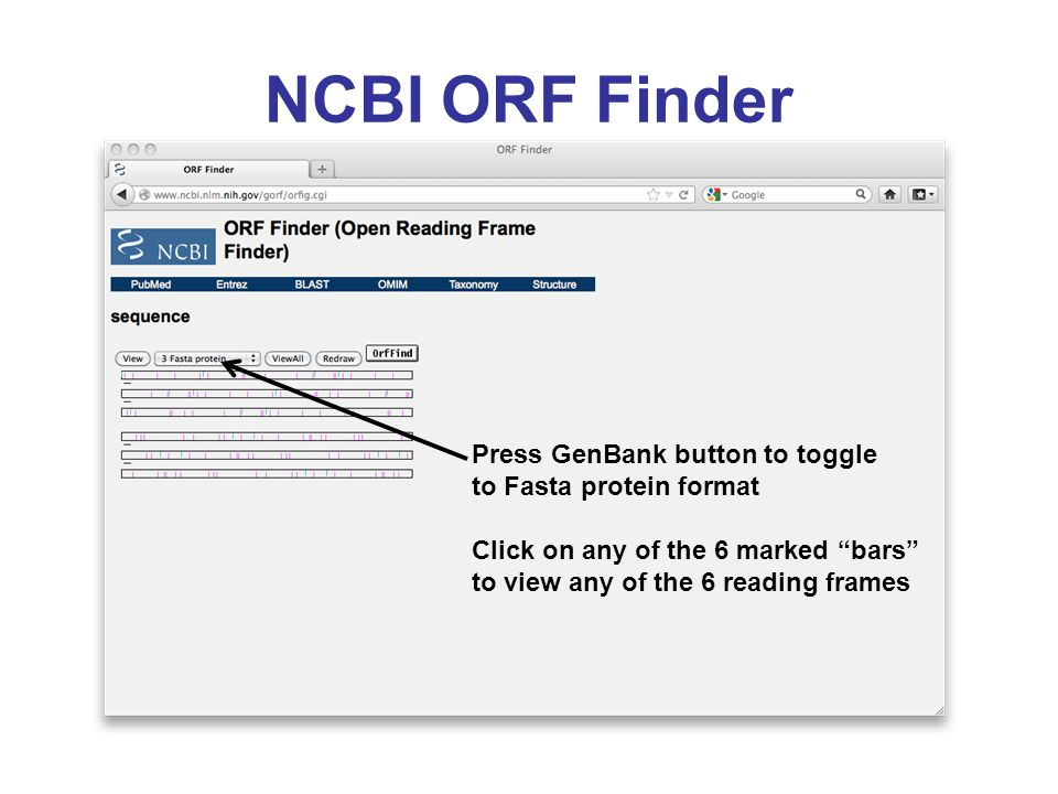 NCBI ORF Finder Press GenBank button to toggle to Fasta protein format Click on any of the 6 marked bars to view any of the 6 reading frames