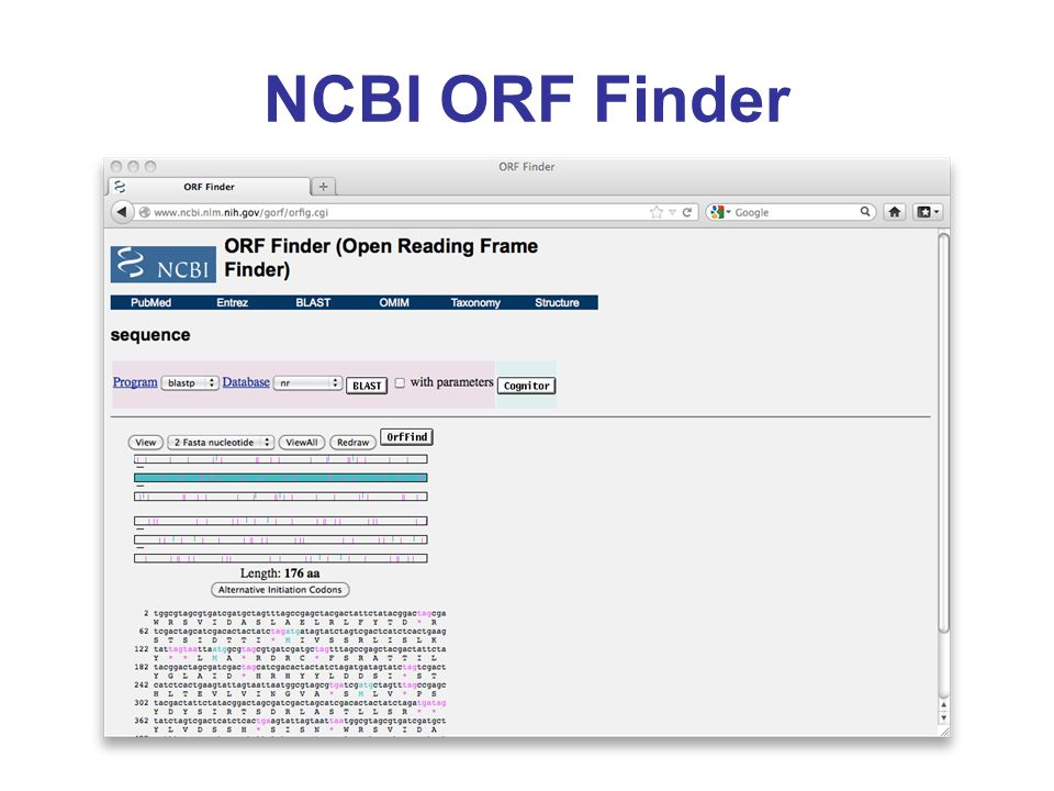 NCBI ORF Finder