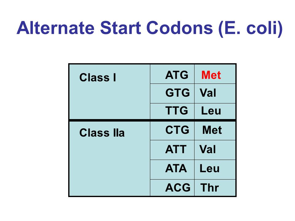 Alternate Start Codons (E.