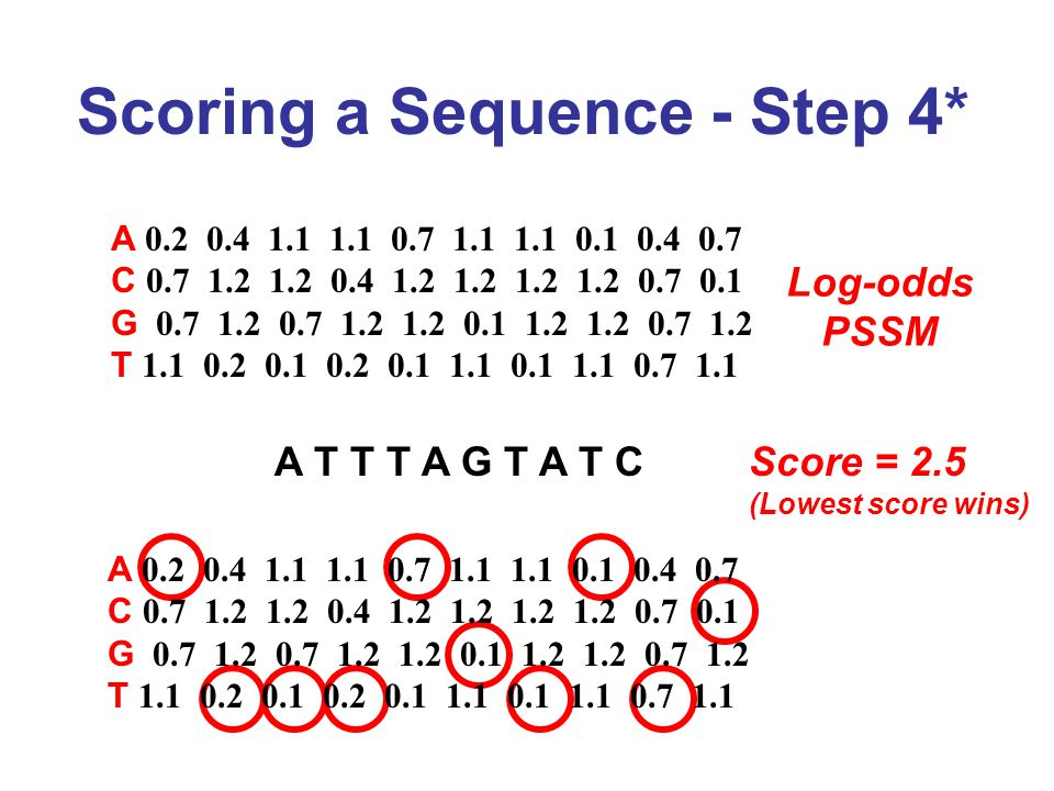 Scoring a Sequence - Step 4* Log-odds PSSM A T T T A G T A T C A 0.2 0.4 1.1 1.1 0.7 1.1 1.1 0.1 0.4 0.7 C 0.7 1.2 1.2 0.4 1.2 1.2 1.2 1.2 0.7 0.1 G 0.7 1.2 0.7 1.2 1.2 0.1 1.2 1.2 0.7 1.2 T 1.1 0.2 0.1 0.2 0.1 1.1 0.1 1.1 0.7 1.1 A 0.2 0.4 1.1 1.1 0.7 1.1 1.1 0.1 0.4 0.7 C 0.7 1.2 1.2 0.4 1.2 1.2 1.2 1.2 0.7 0.1 G 0.7 1.2 0.7 1.2 1.2 0.1 1.2 1.2 0.7 1.2 T 1.1 0.2 0.1 0.2 0.1 1.1 0.1 1.1 0.7 1.1 Score = 2.5 (Lowest score wins)