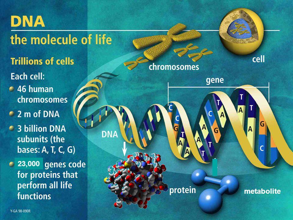 Glimmer 3.02 Website http://www.ncbi.nlm.nih.gov/genomes/MICROBES/glimmer_3.cgi