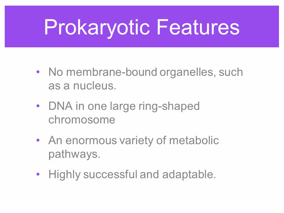 Prokaryotic Features No membrane-bound organelles, such as a nucleus. DNA in one large ring-shaped chromosome An enormous variety of metabolic pathway