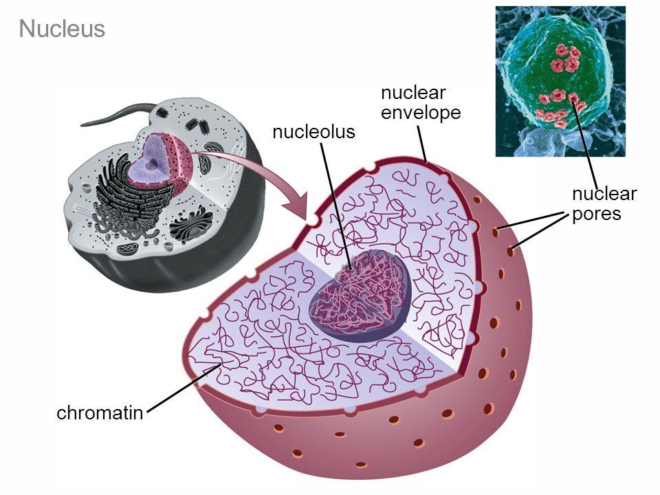 Figure 4-9a Biology: Life on Earth 8/e ©2008 Pearson Prentice Hall, Inc.
