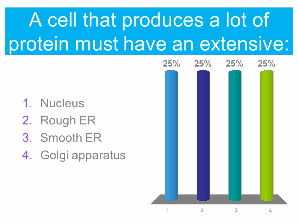 A cell that produces a lot of protein must have an extensive: 1.Nucleus 2.Rough ER 3.Smooth ER 4.Golgi apparatus