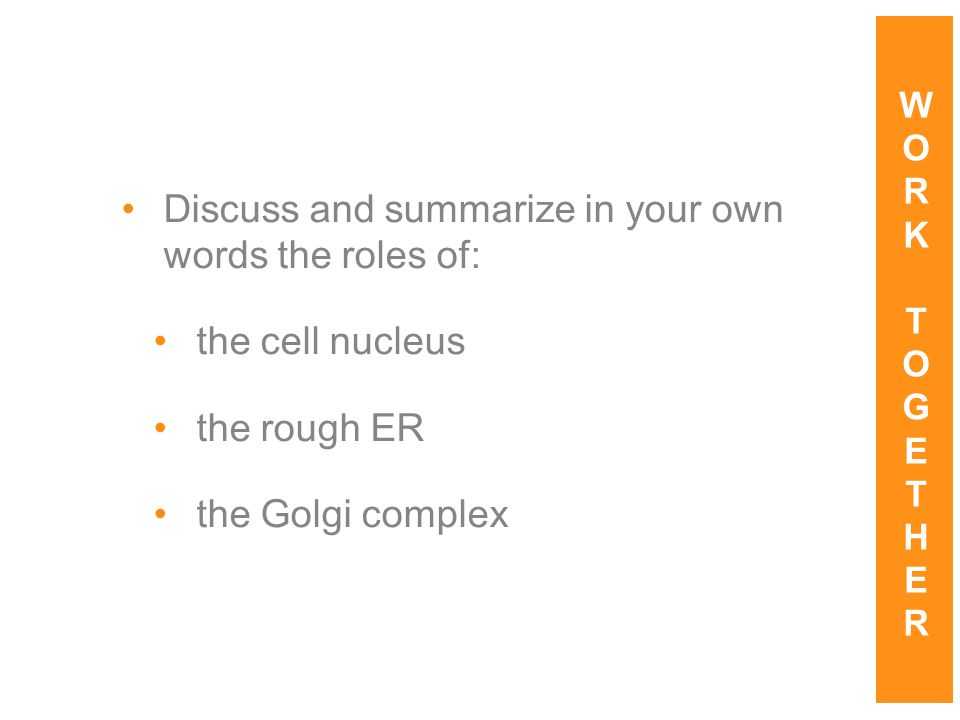 Discuss and summarize in your own words the roles of: the cell nucleus the rough ER the Golgi complex WORKTOGETHERWORKTOGETHER