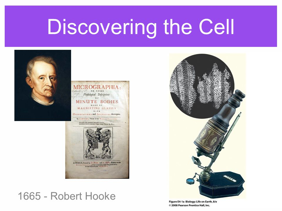 Discovering the Cell 1665 - Robert Hooke