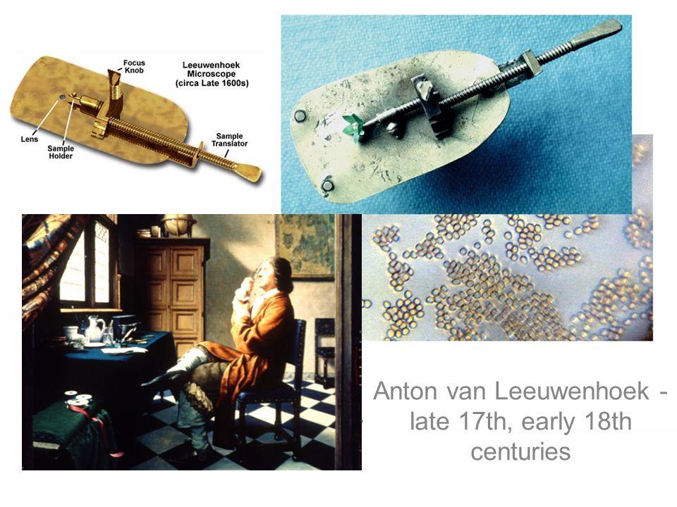 Anton van Leeuwenhoek - late 17th, early 18th centuries