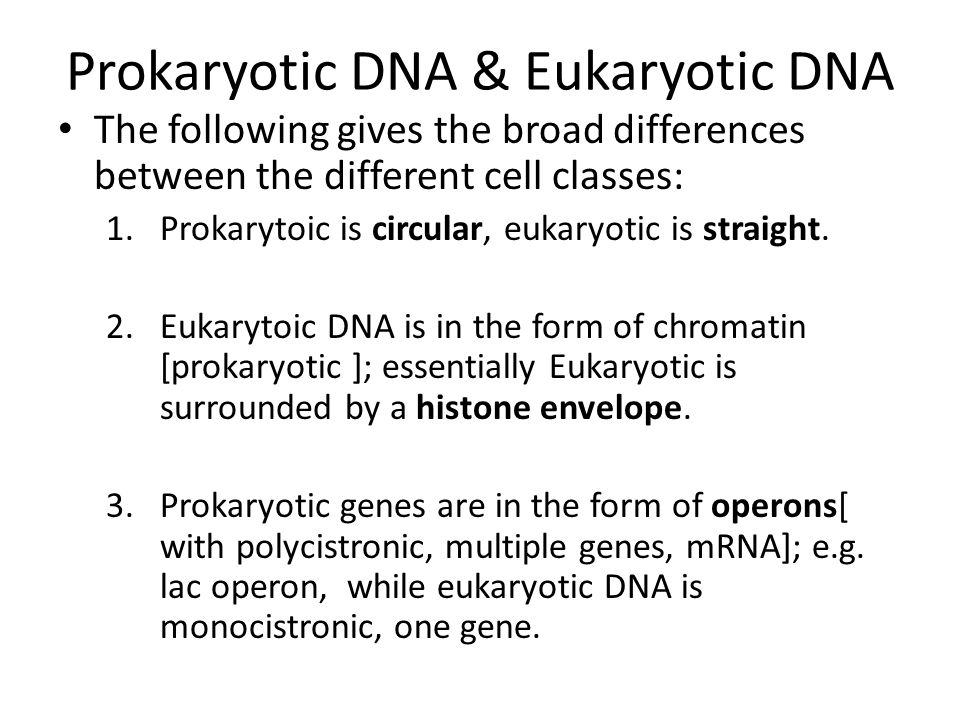 Prokaryotic DNA & Eukaryotic DNA The following gives the broad differences between the different cell classes: 1.Prokarytoic is circular, eukaryotic is straight.