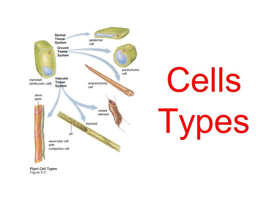 Cells Types