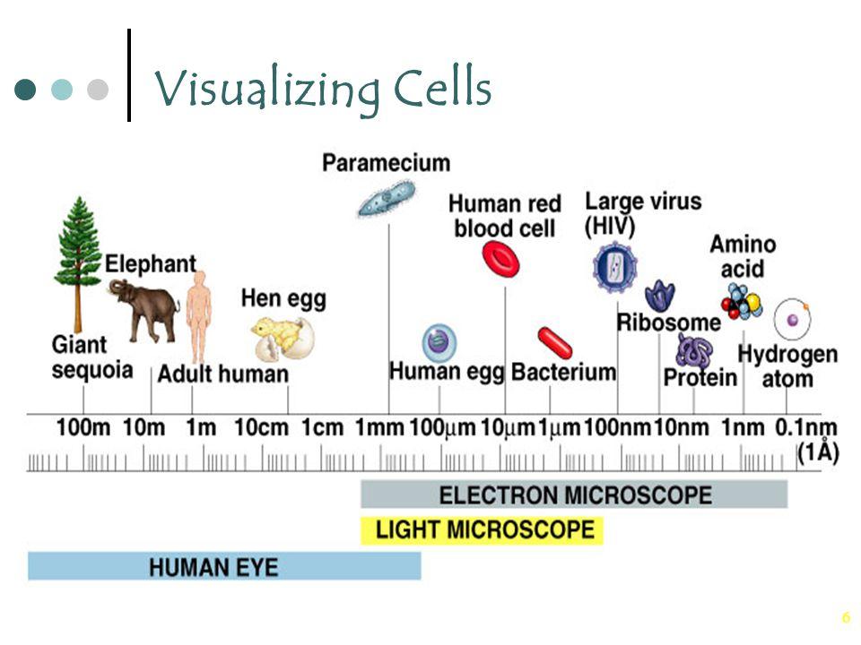 16 Visualizing Cells
