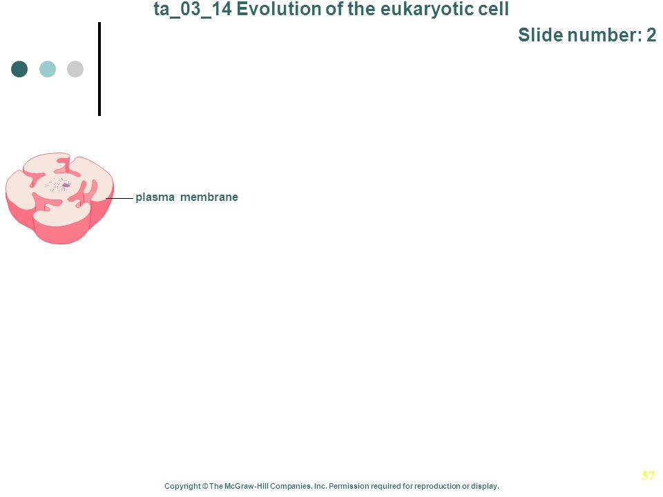 57 ta_03_14 Evolution of the eukaryotic cell Slide number: 2 Copyright © The McGraw-Hill Companies, Inc. Permission required for reproduction or displ